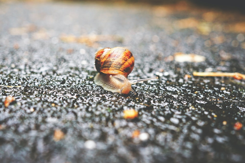 focus photography of brown snail
