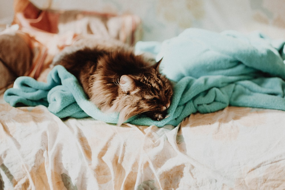 cat sleeping on teal comforter