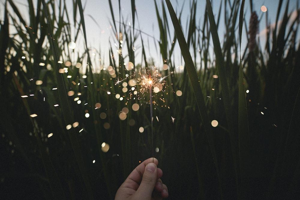 person holding firecracker near grasses