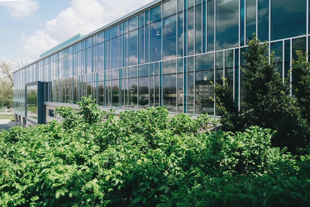 green-leafed plants beside building
