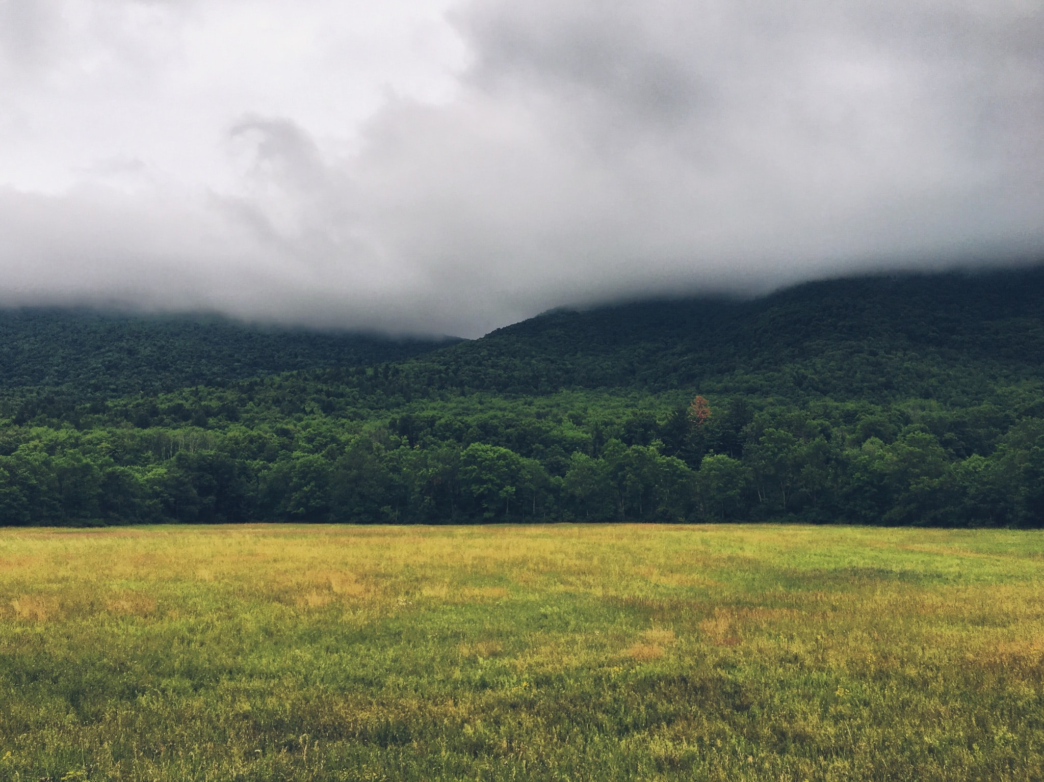 Grassland with thick fog hovers over the Catskill Mountains