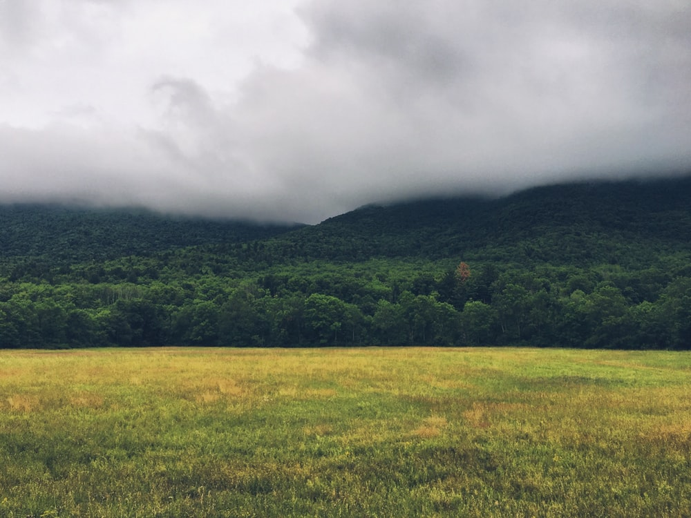 photography of grass field near forest
