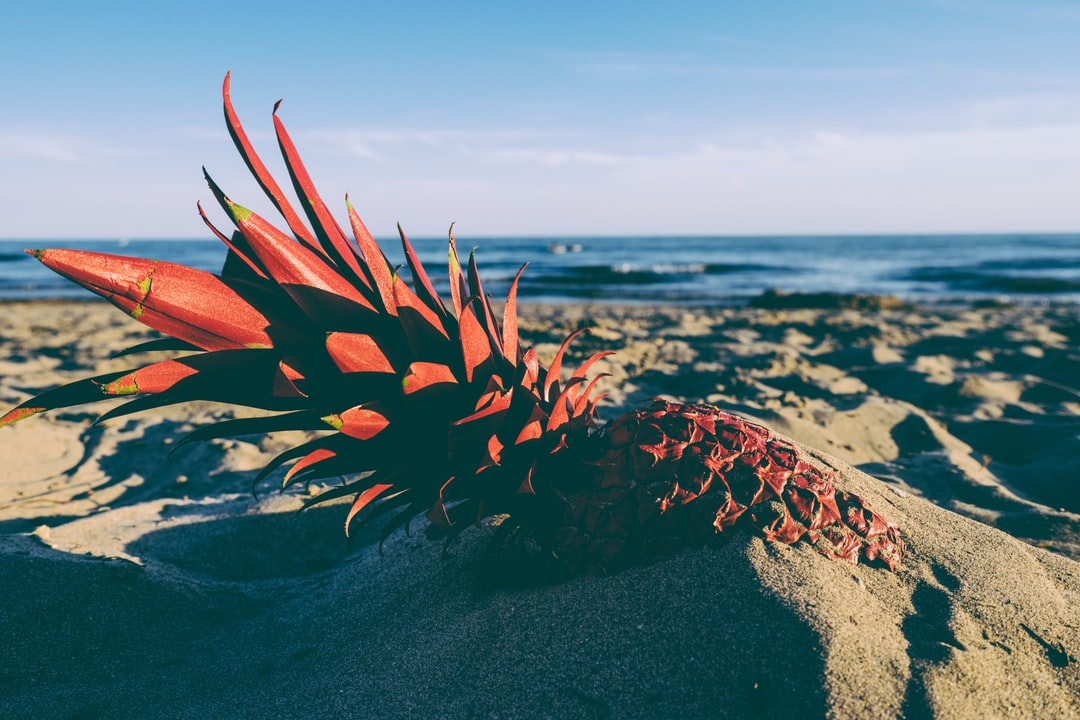 red pineapple in the sand