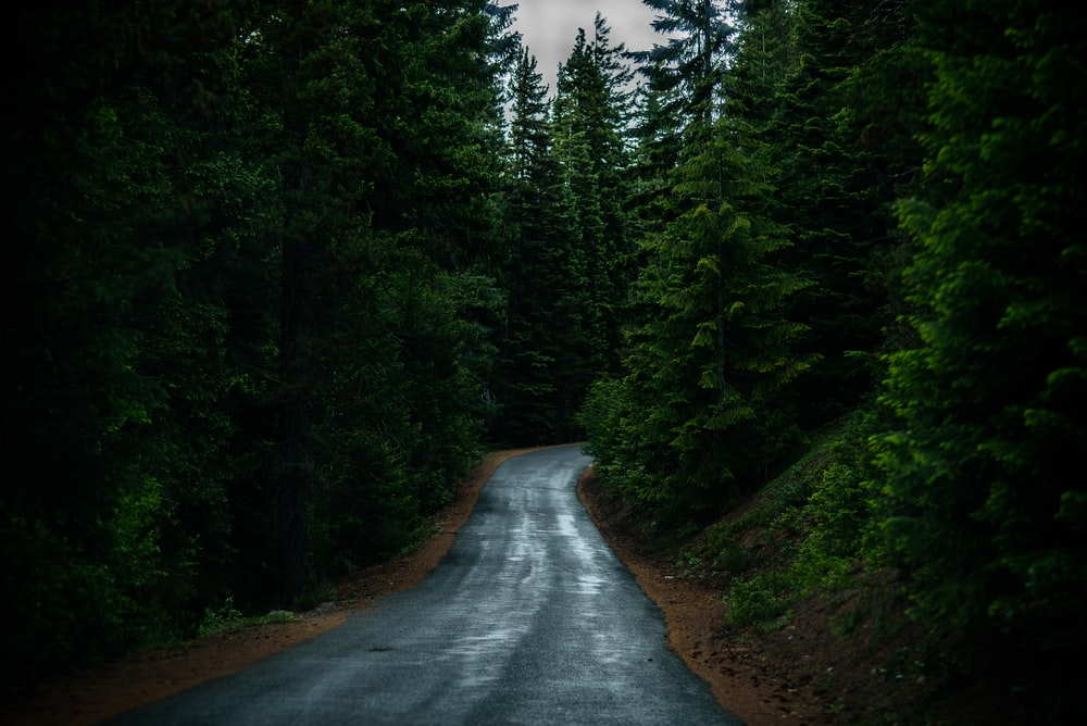landscape photography of road between trees