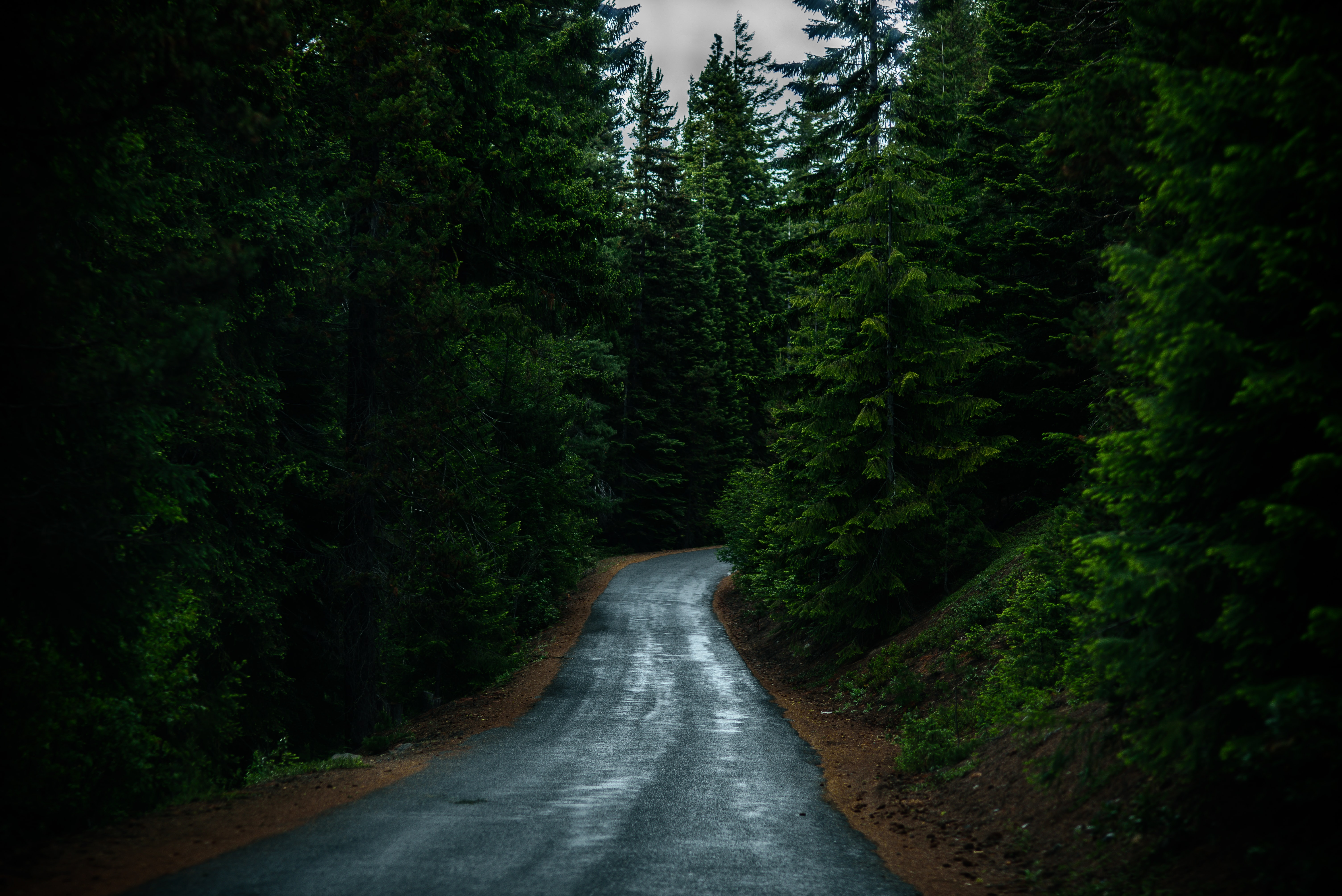 A wet asphalt road lined with green conifers in Crescent