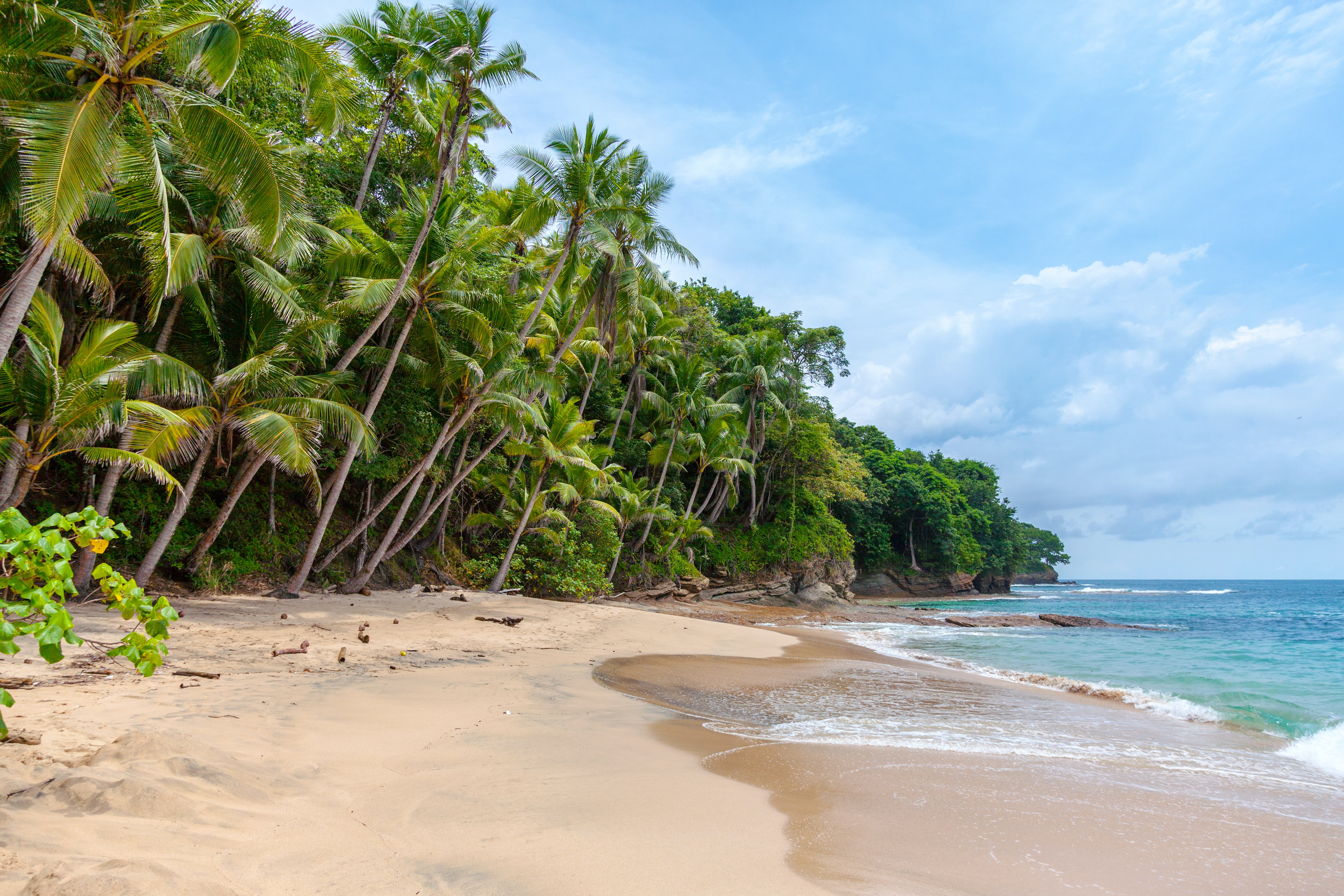 Palm trees leaning forward towards the sea on a secluded beach