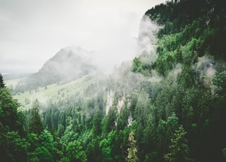 green leaf trees sprouts on mountain