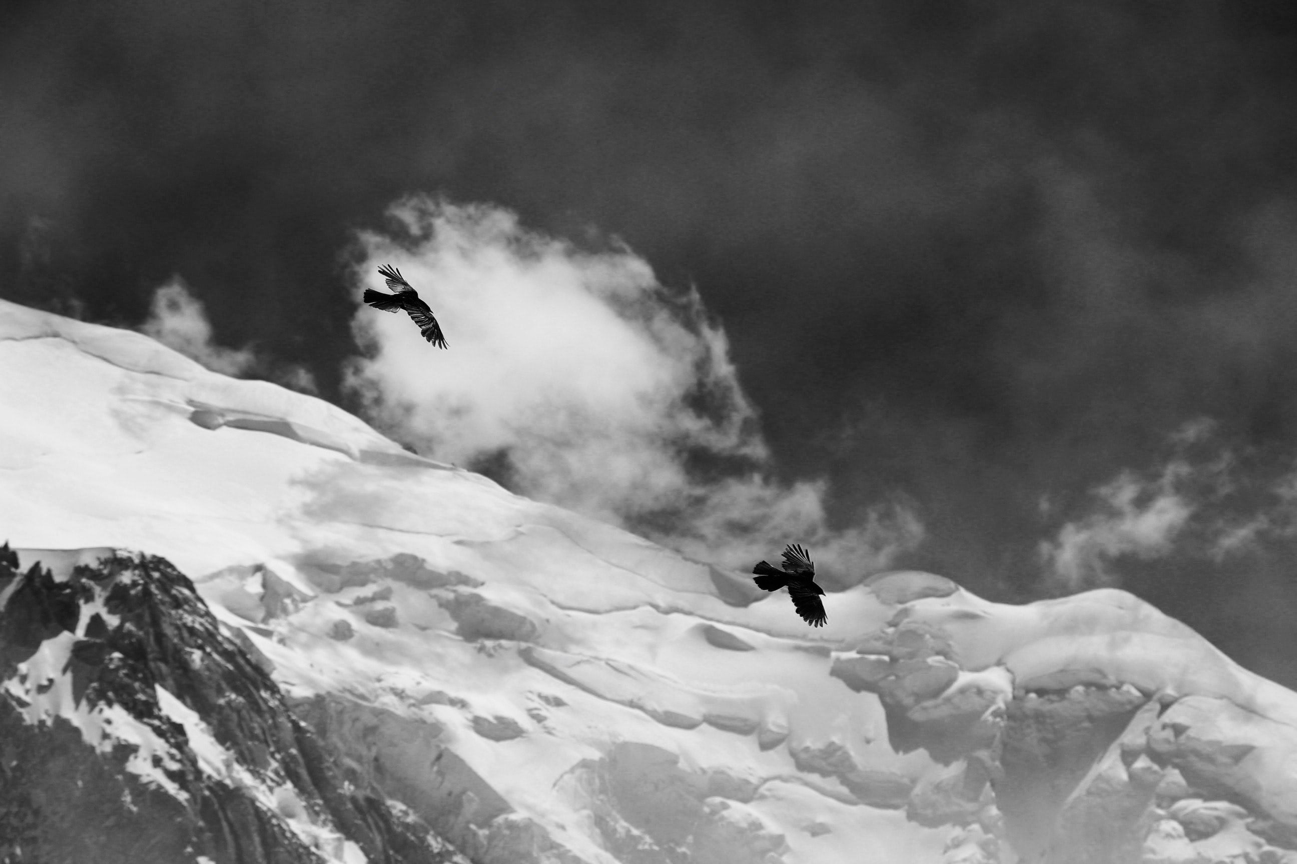 Two birds in flight over snowy mountains and dark,cloudy skies