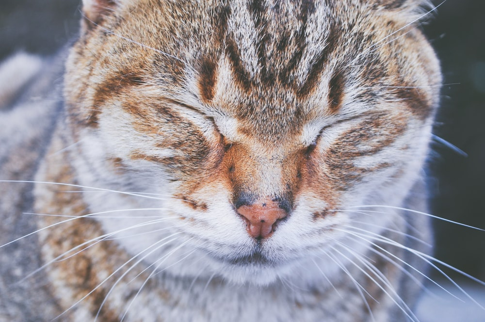 close-up photo of brown and white cat