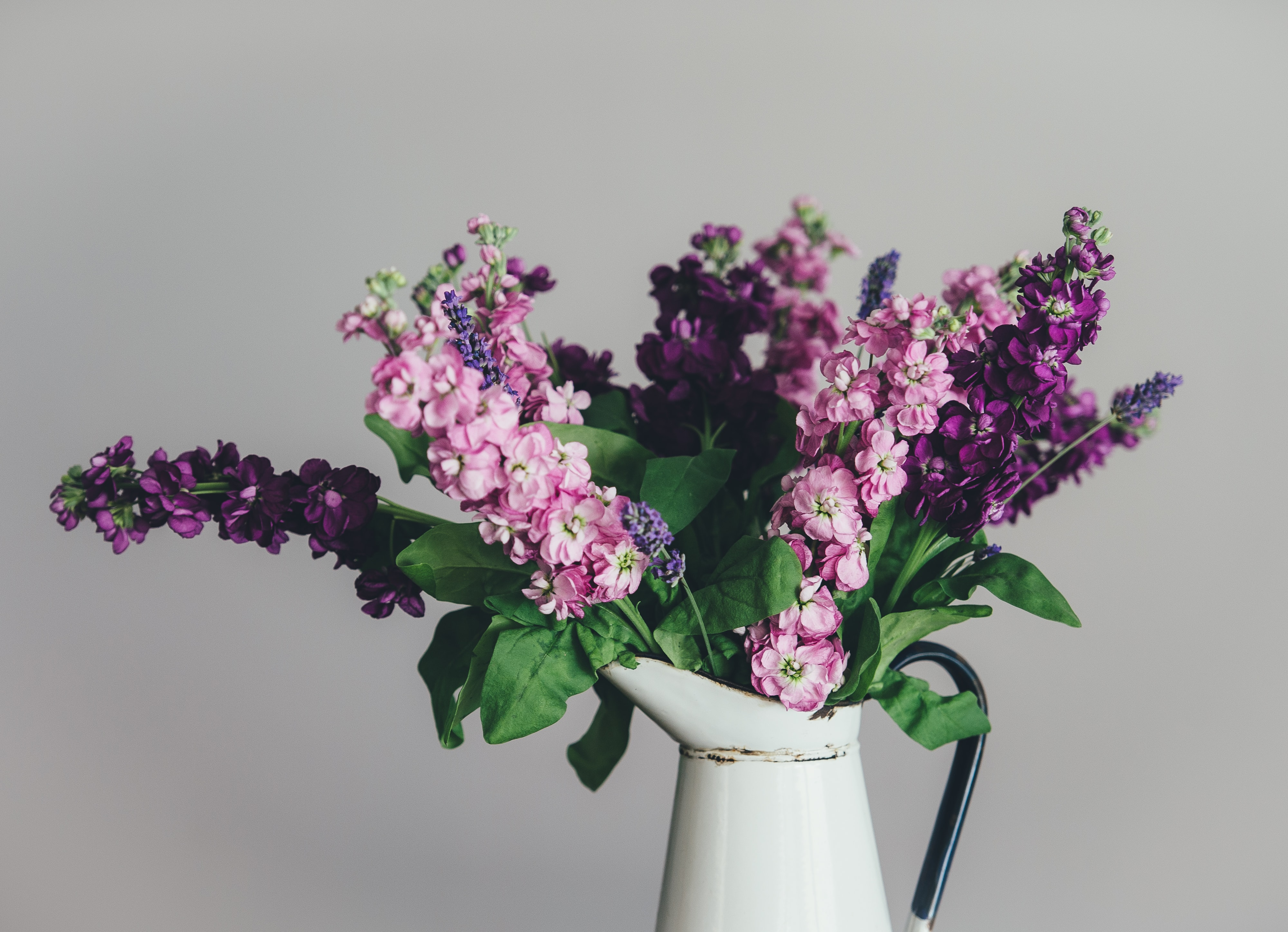 photo of pink and purple petaled flowers with white ceramic vase