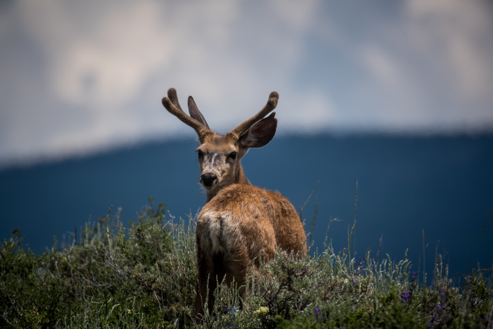 shallow focus photography of deer and plants