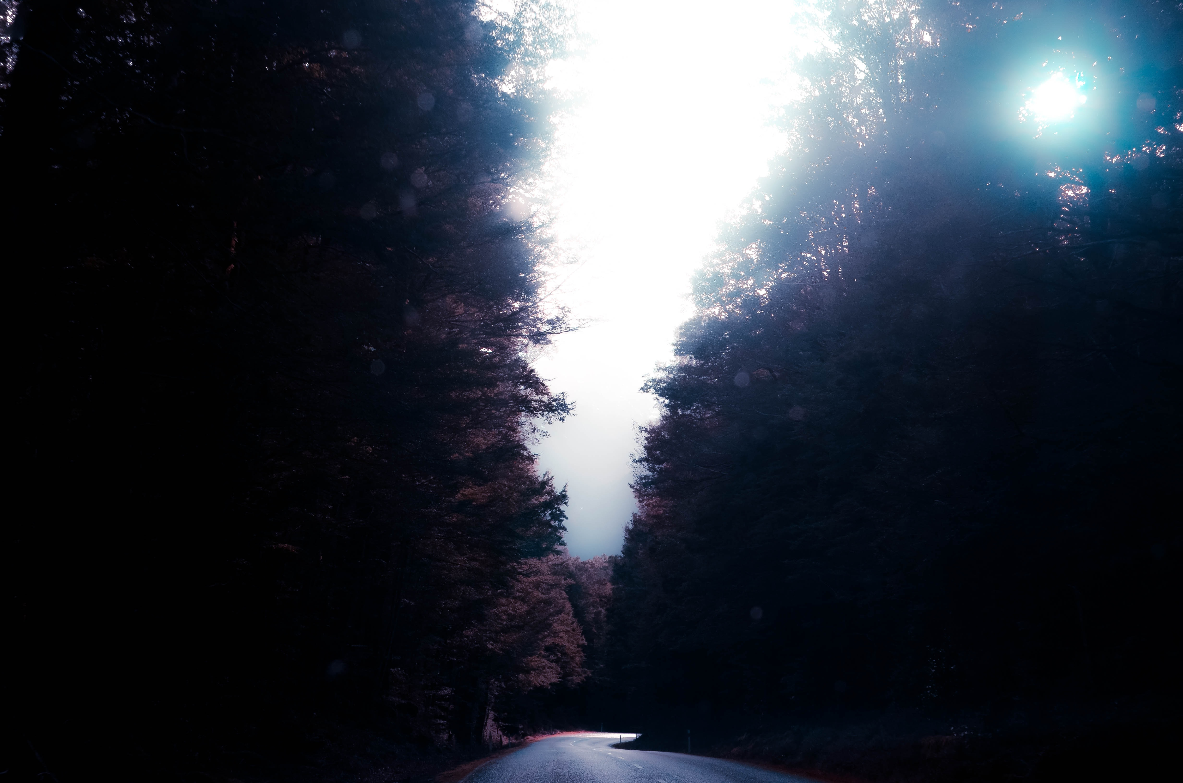Sun breaking through the treetops over a tree-lined road