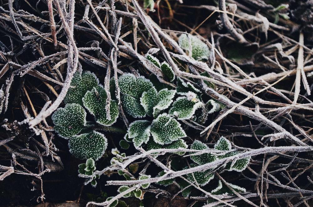 closeup photo of green plant