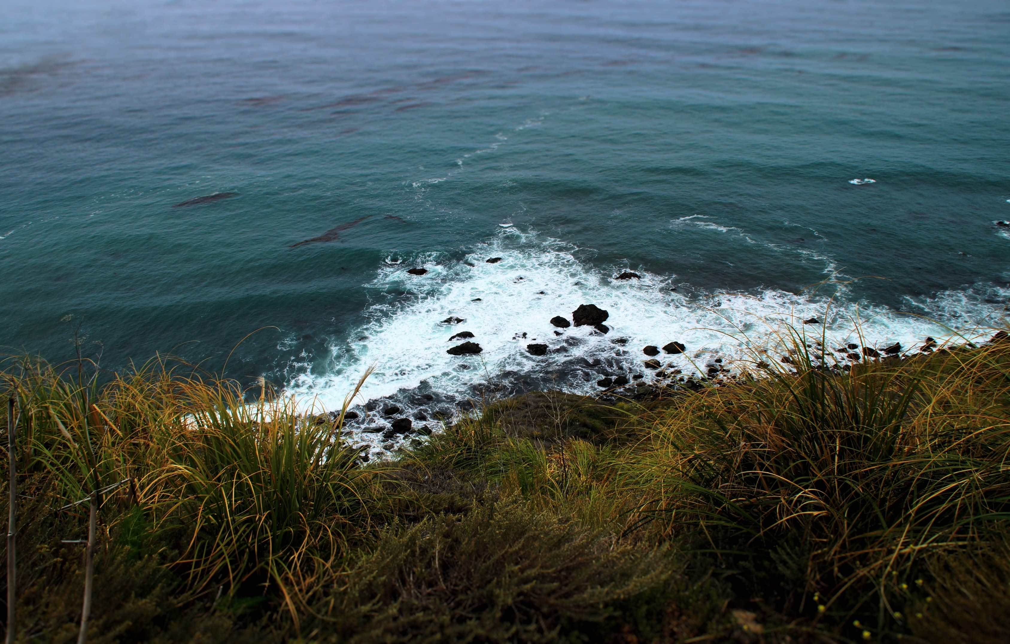 Rocky ocean shore viewed from a grassy hill at Big Sur