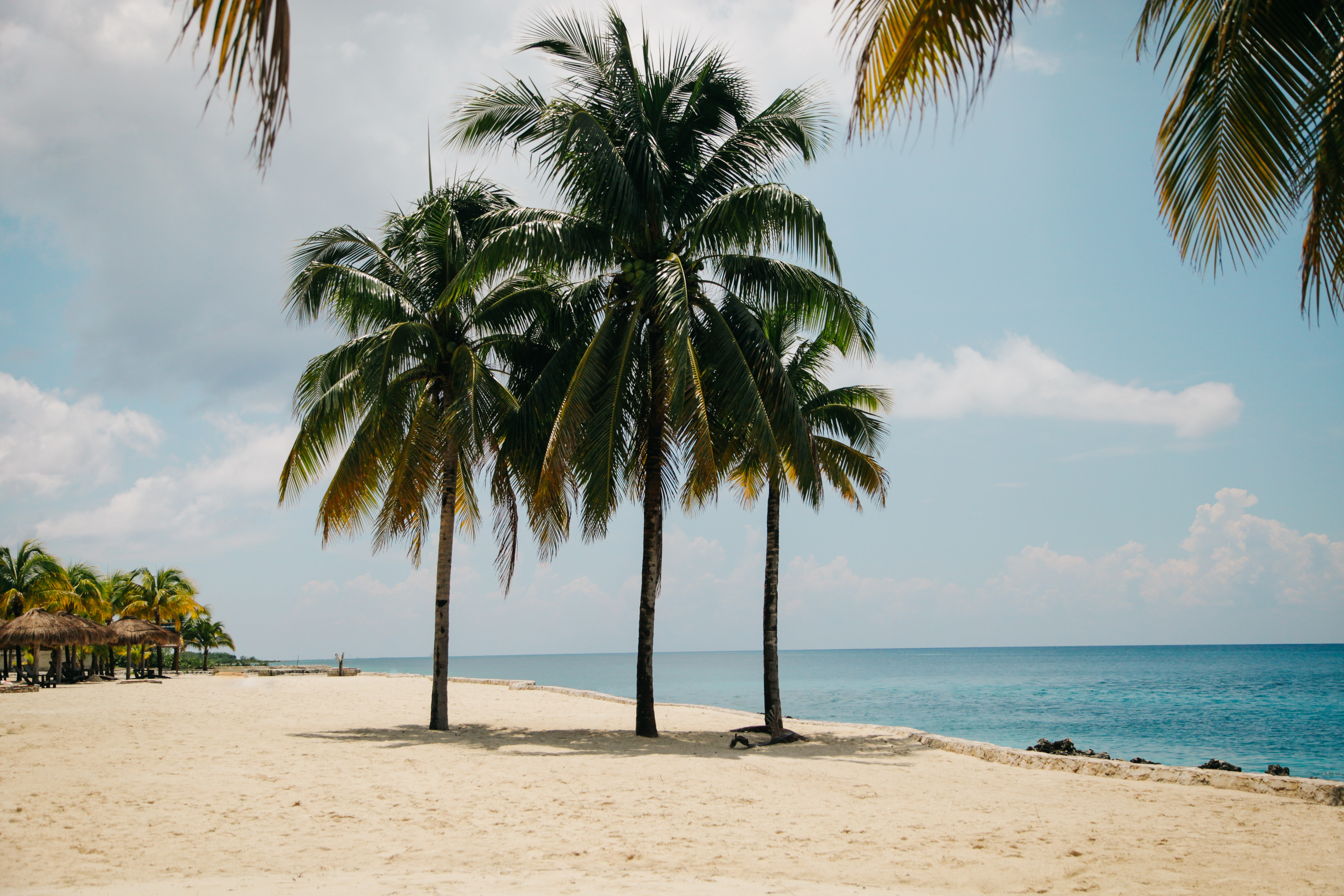 three coconut trees on brown sand near body of water during daytime