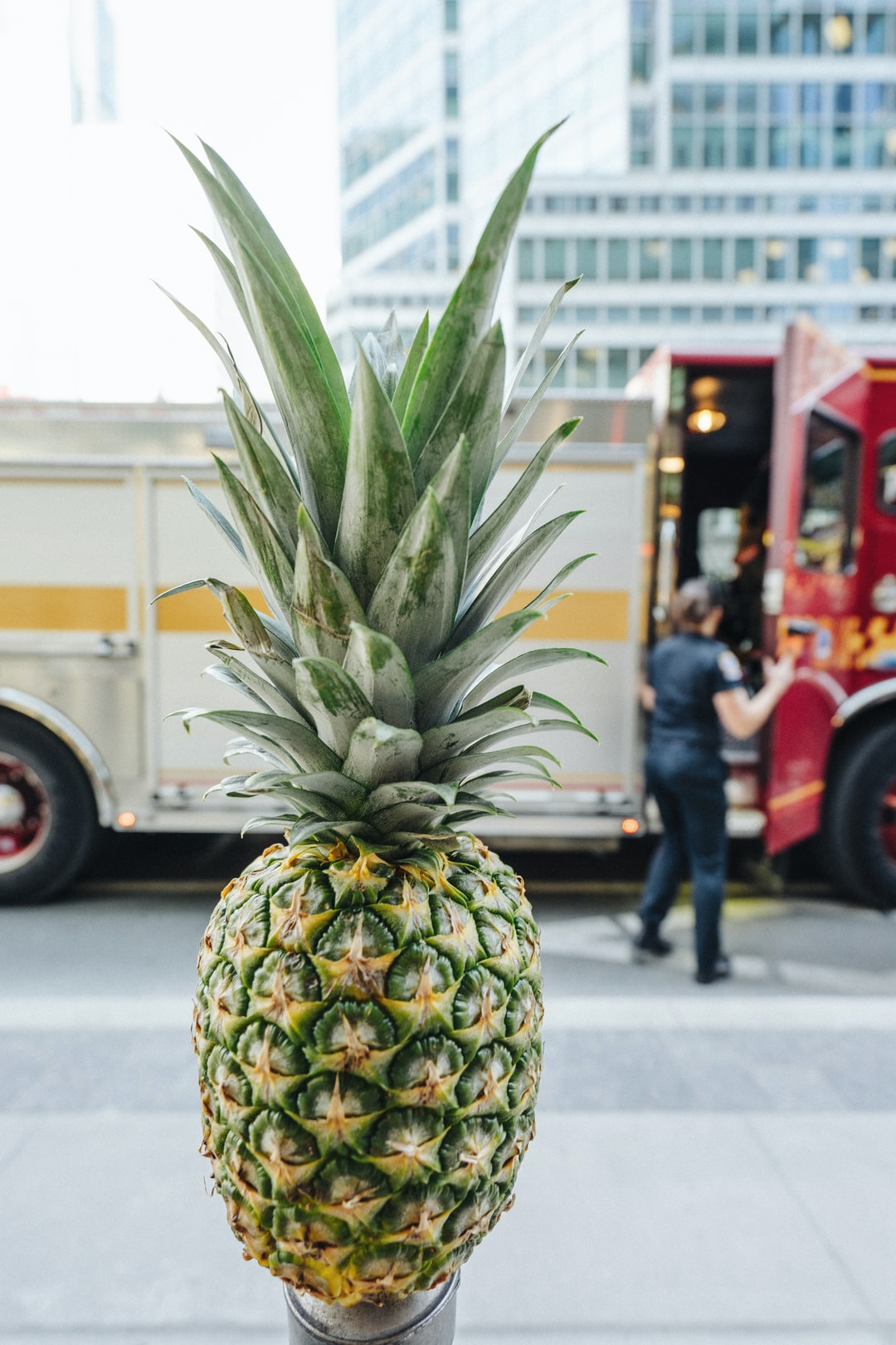 pineapple image from toronto for free download