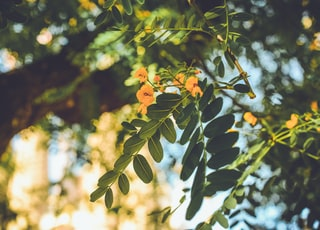 selective focus photography of green and yellow leaf tree