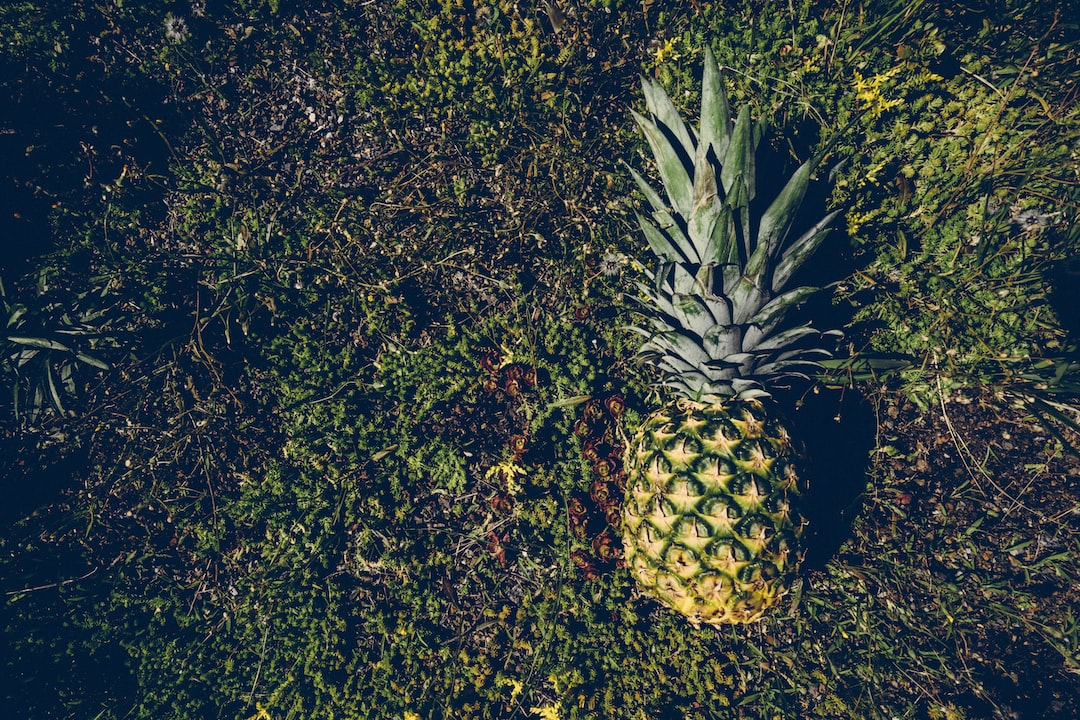 free pineapple image from being on toronto city halll green roof