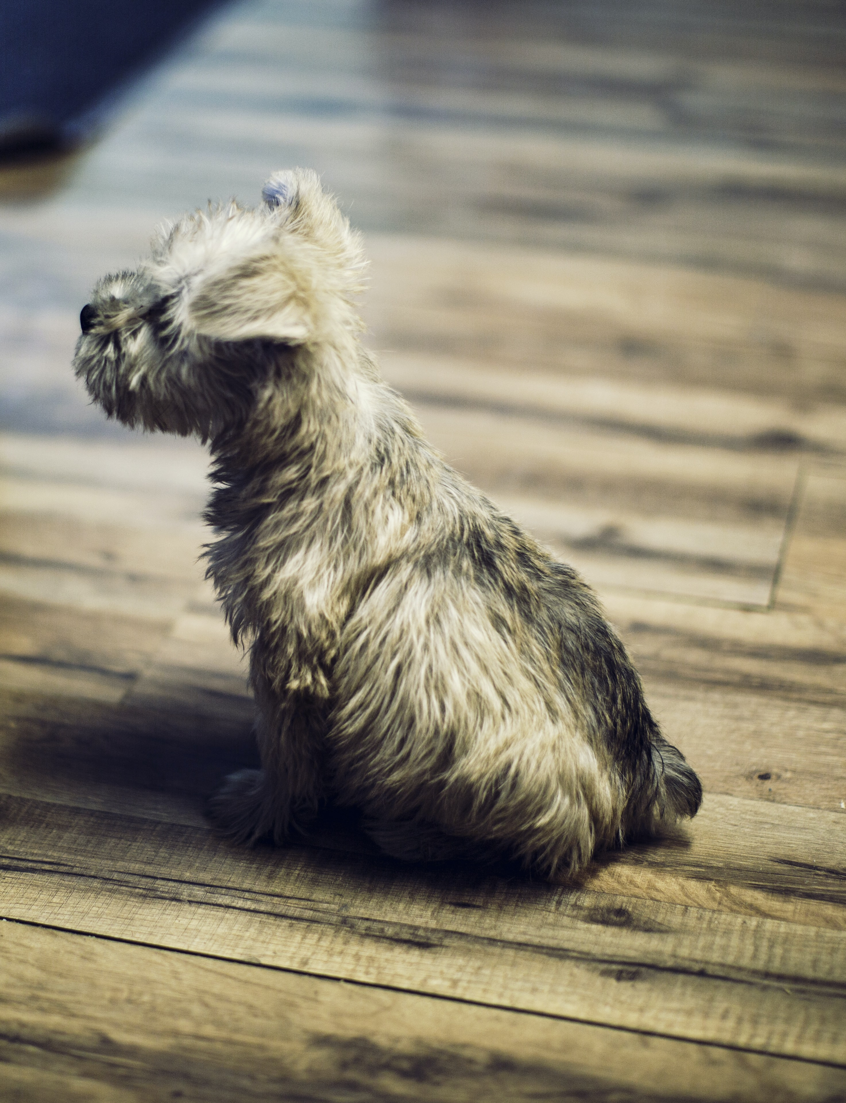 photo of long-coated tan puppy