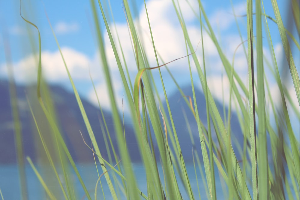 green grass on selective focus photography