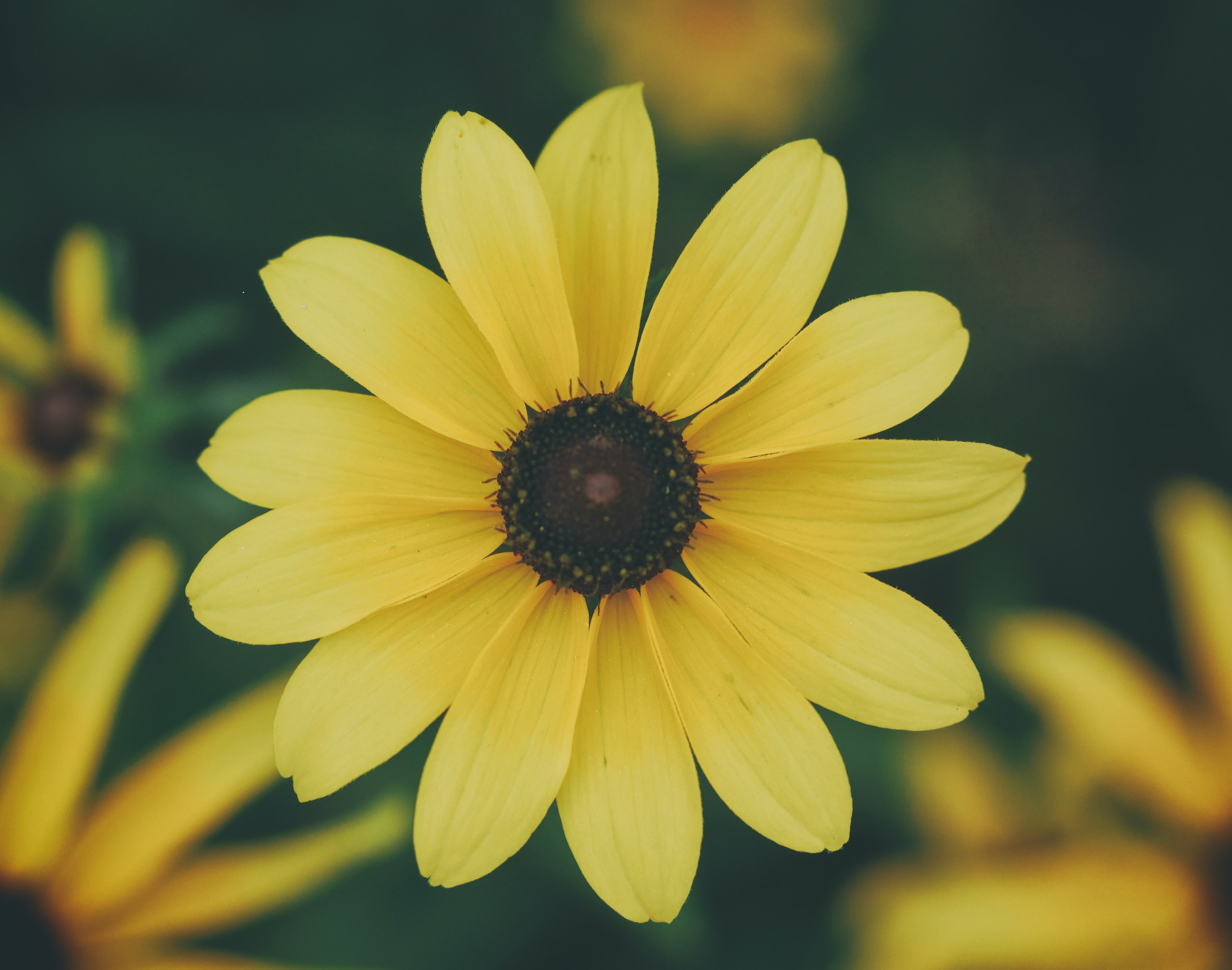 yellow petaled flower in bloom