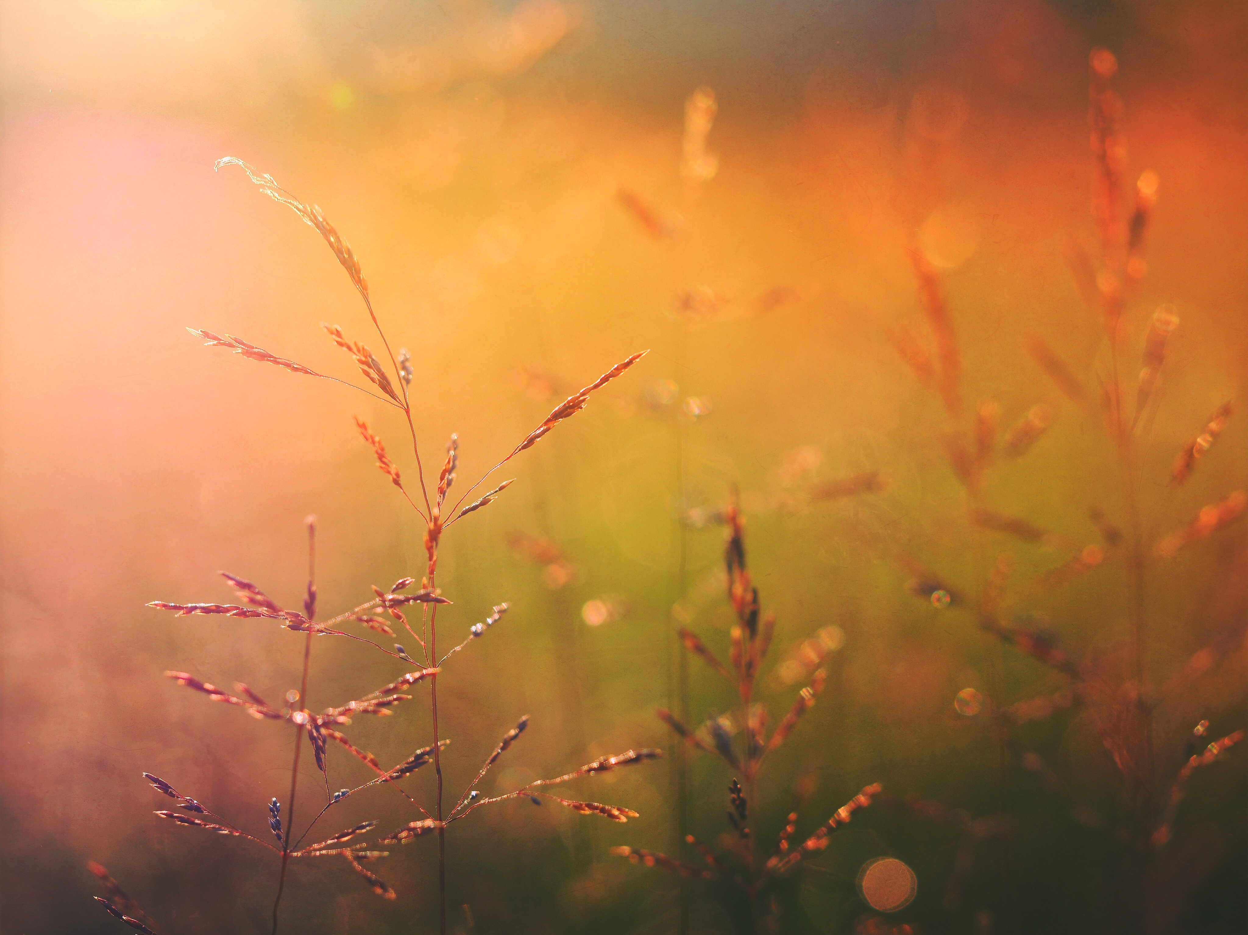 Plant  Golden Hour  Stalk And Nature Hd Photo By Aaron