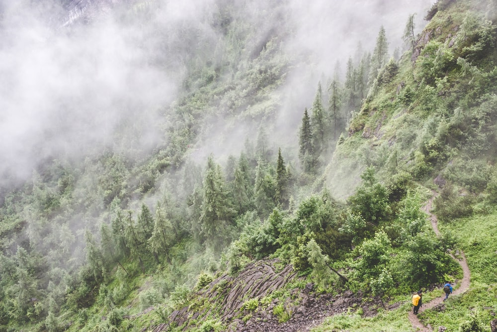 two person walking on hill in forest with fog