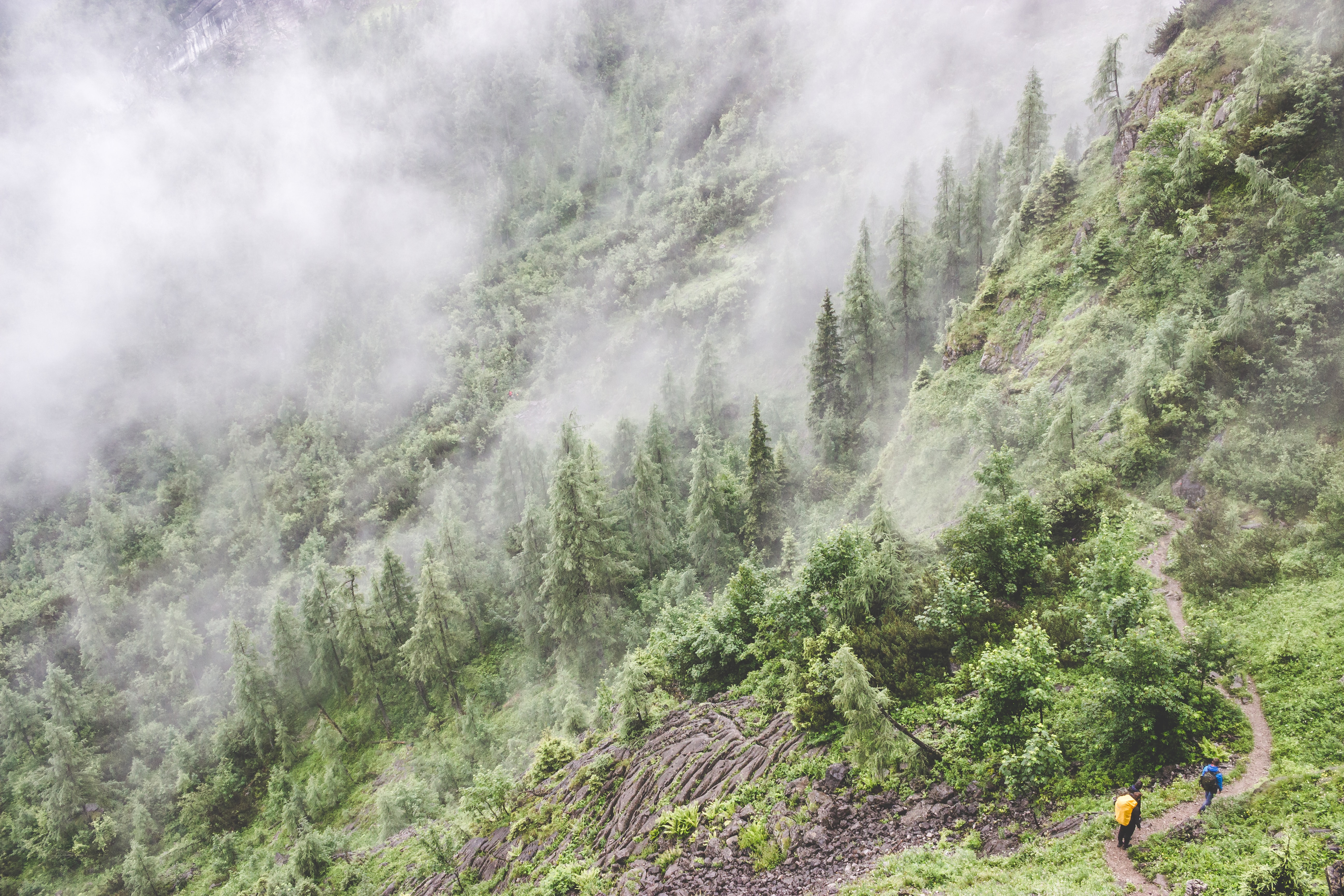 Hikers walking along a narrow path on a wooded slope enveloped in fog