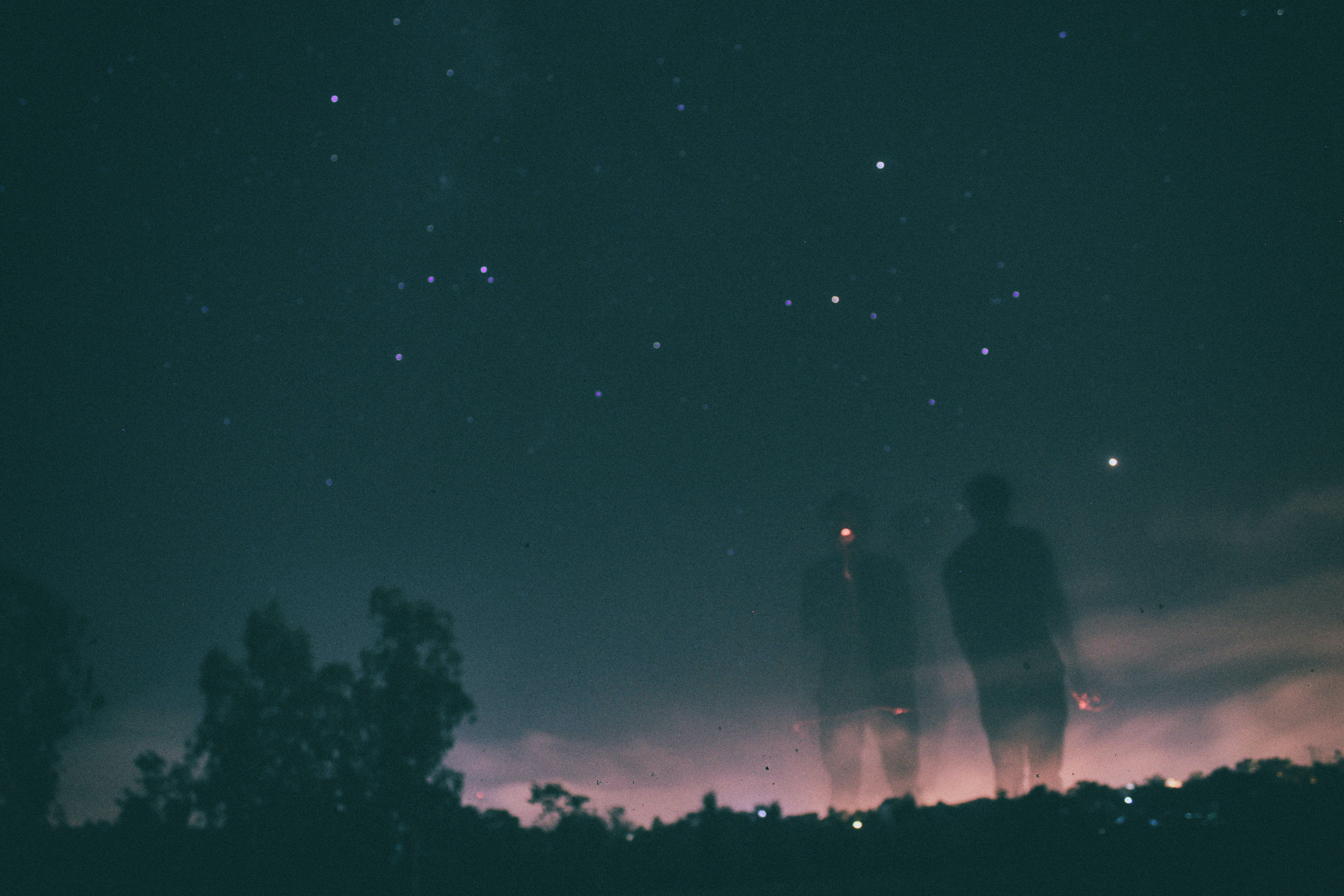 silhouette of trees under dark sky with stars
