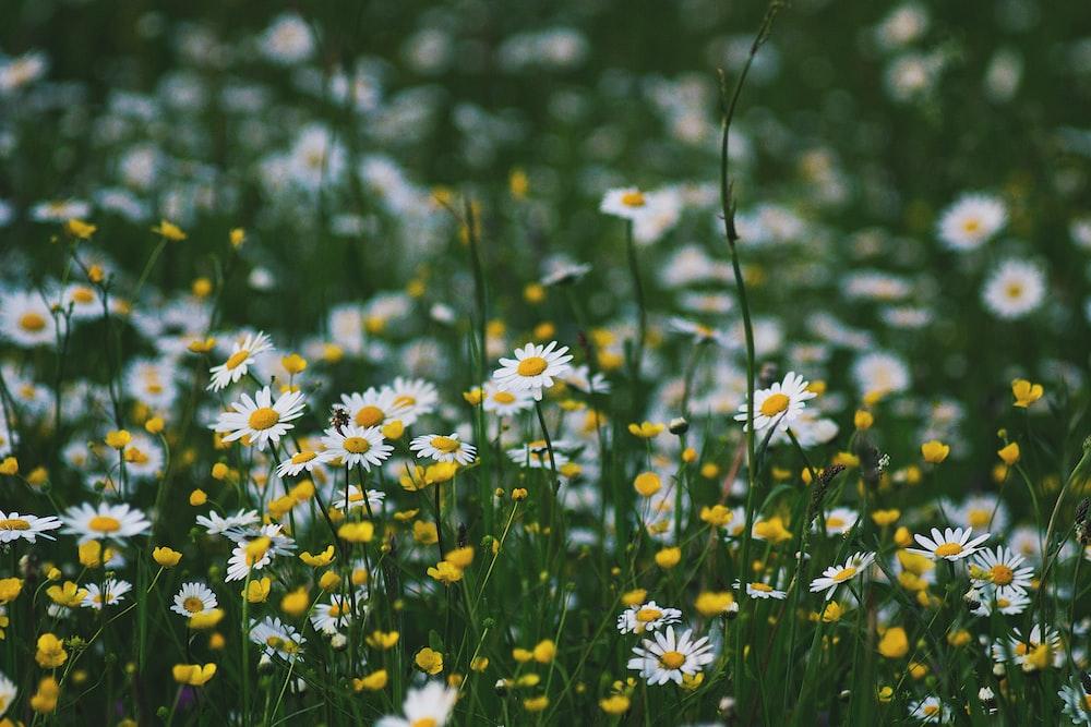 white petaled flower field at daytime