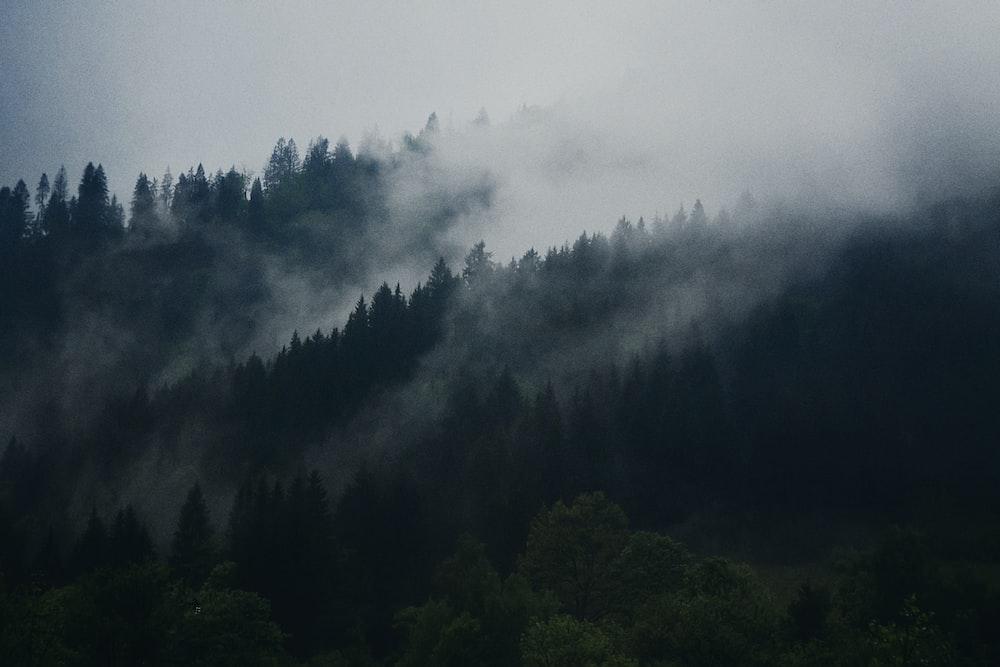 photo of green forest under dark sky