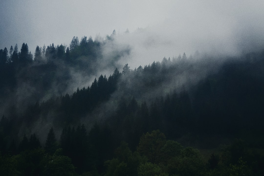 Surface warming leads to more clouds over temperate forest