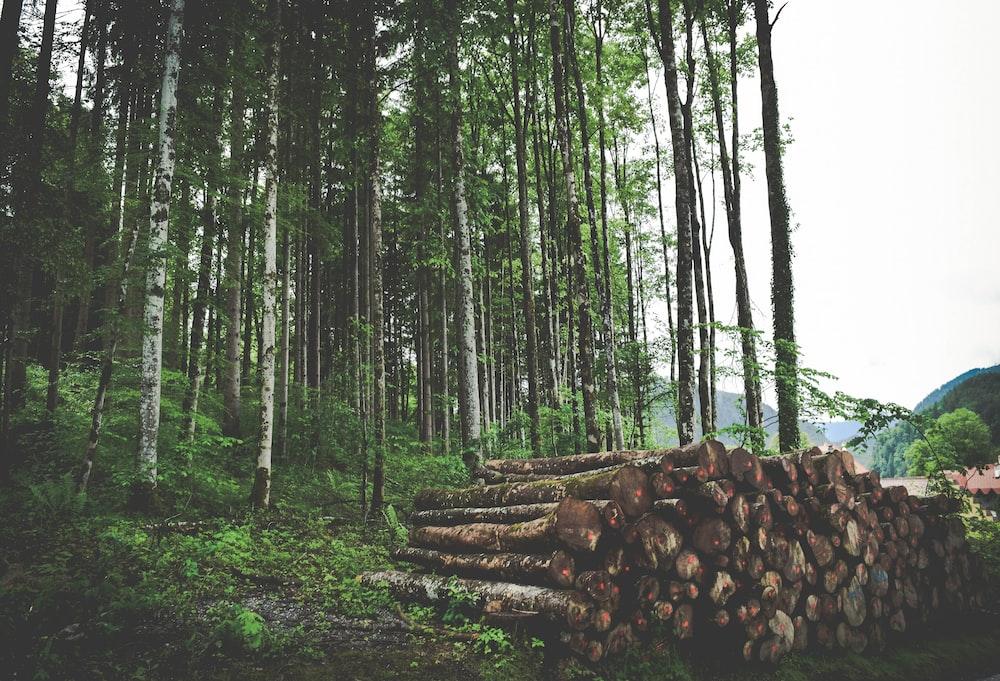 cut logs on grass