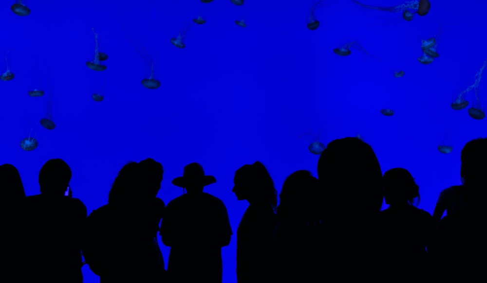 people silhouettes with blue background