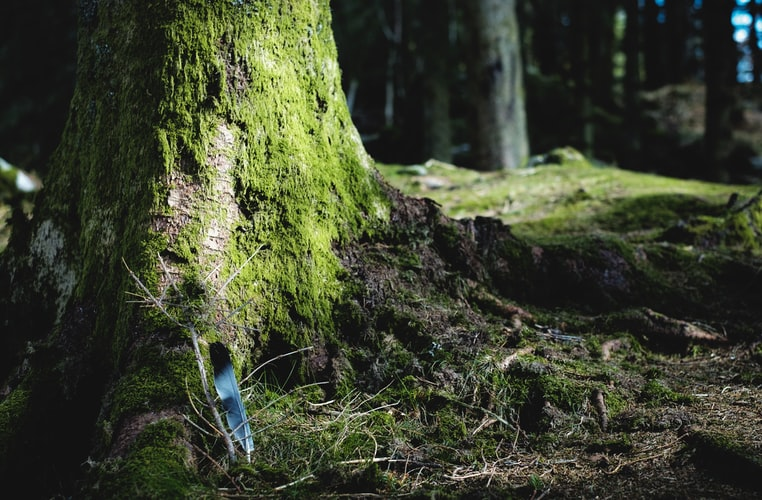 A photo of the mossy base of a tree in a forest. There is a window of sunlight falling on this portion of the tree and a blur of blue in the bottom left corner that must be a bird.