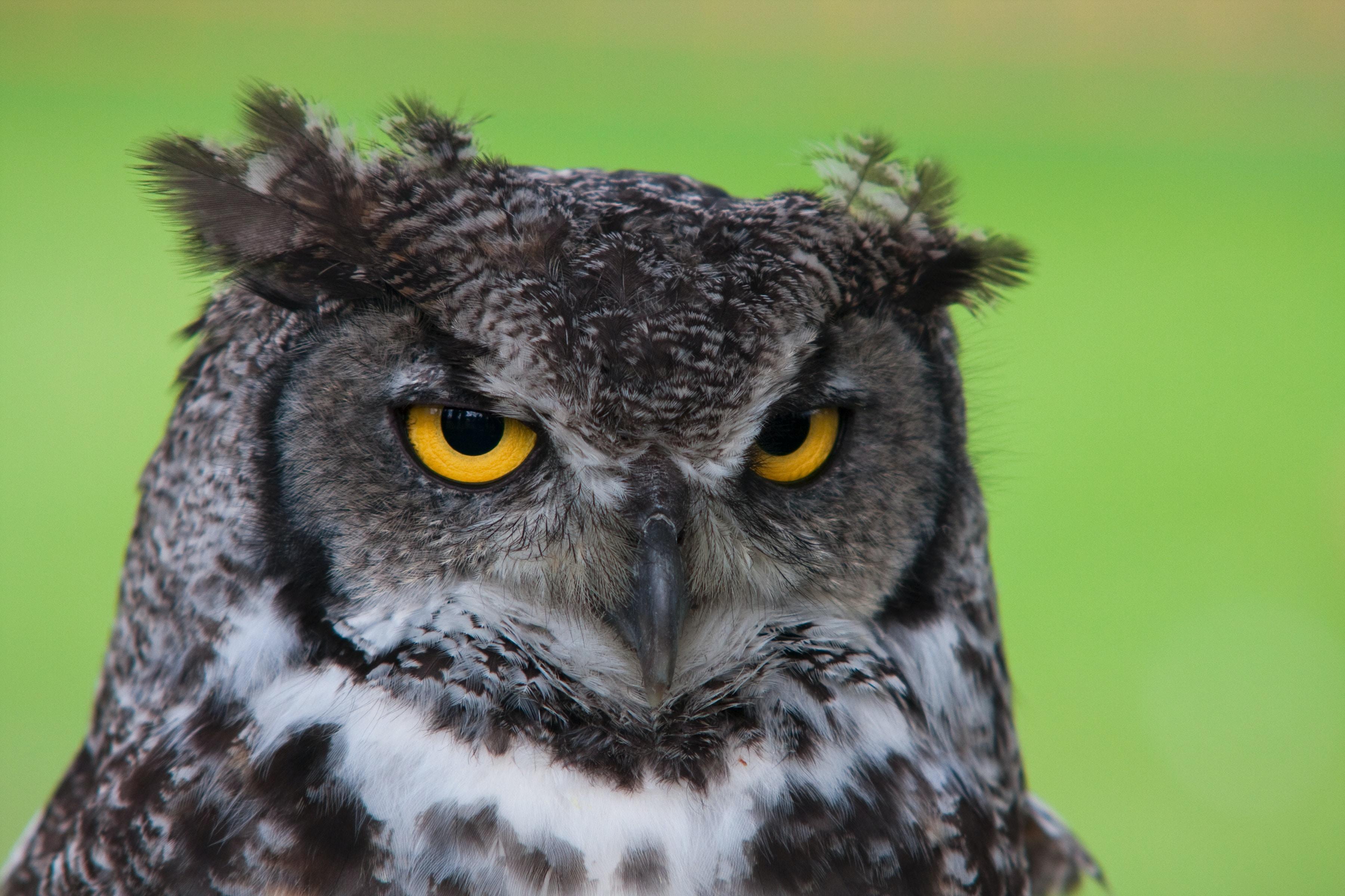 black and white owl plush toy