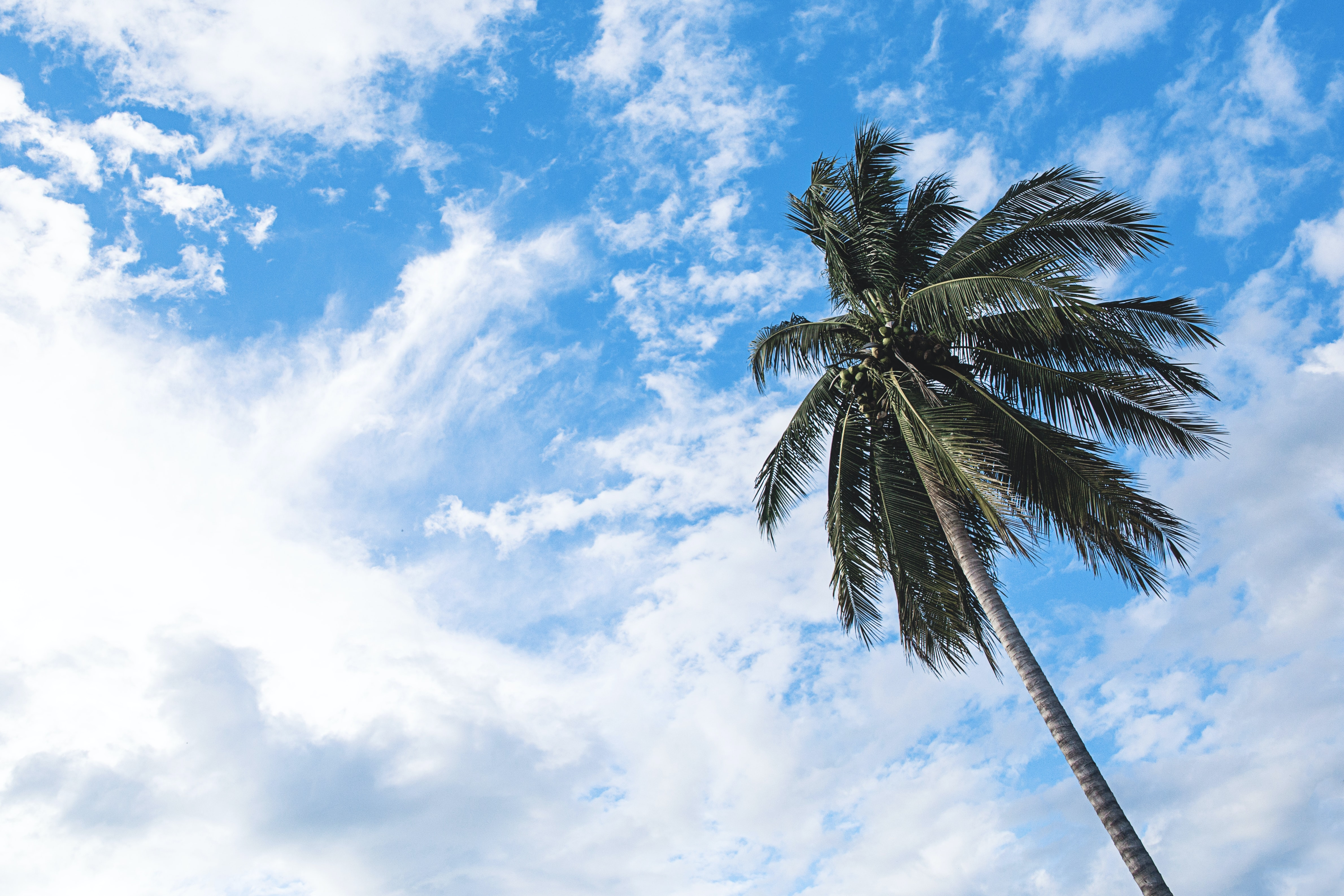Looking up at a palm tree against a bright blue sky with bright clouds
