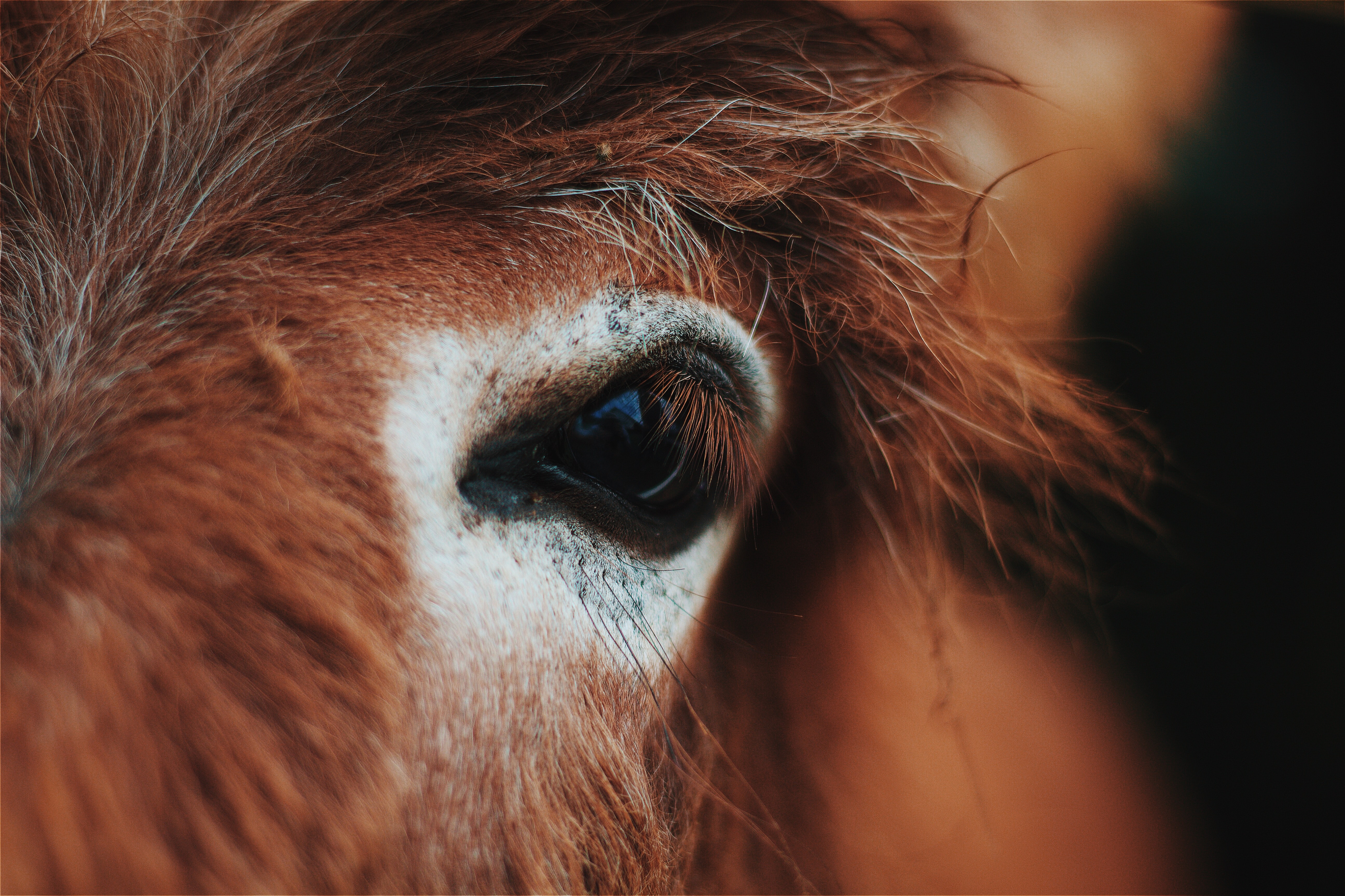 A close-up of a chestnut horse's dark eye
