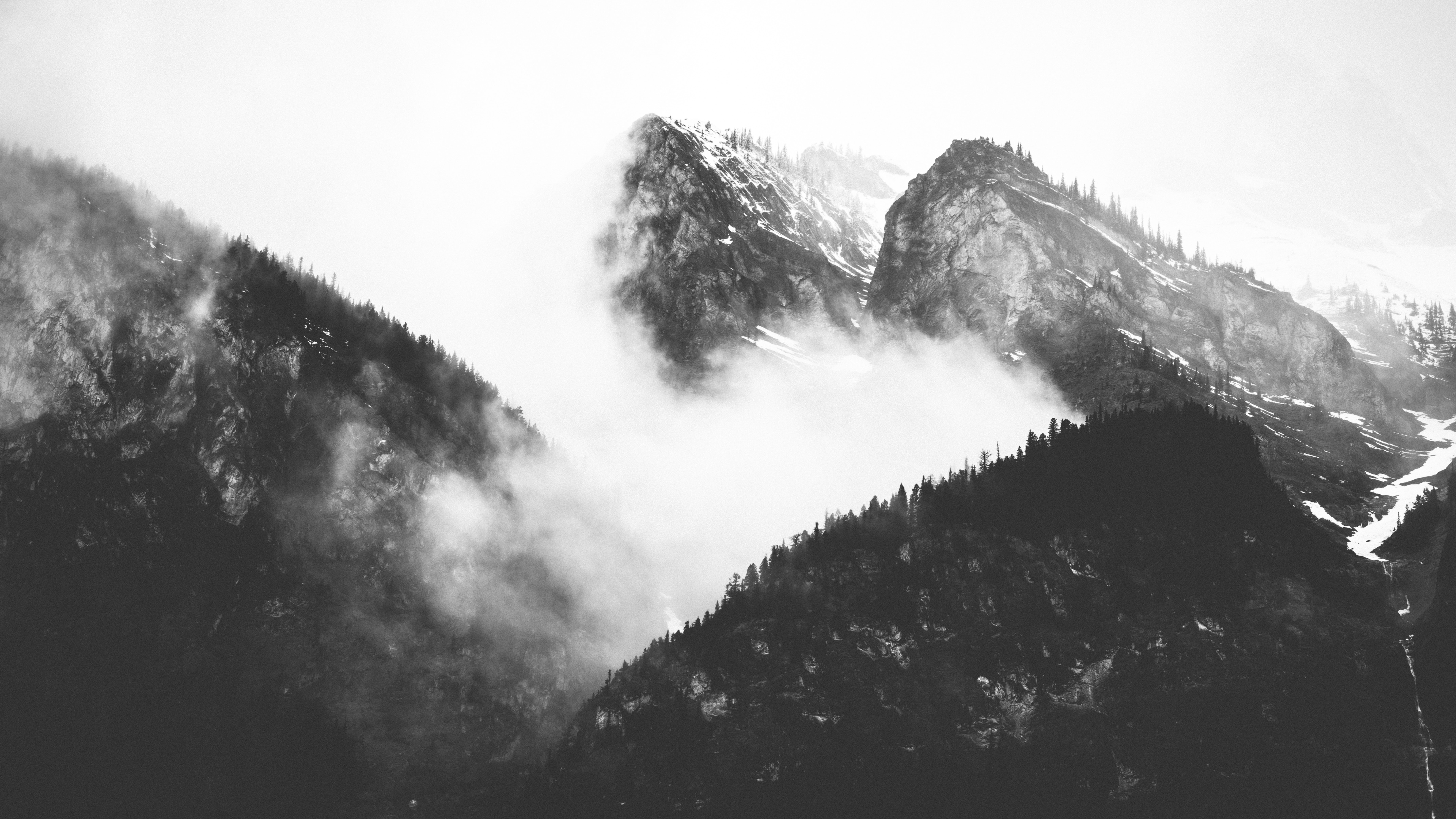 Black and white image of foggy mountains with pine tree silhouettes