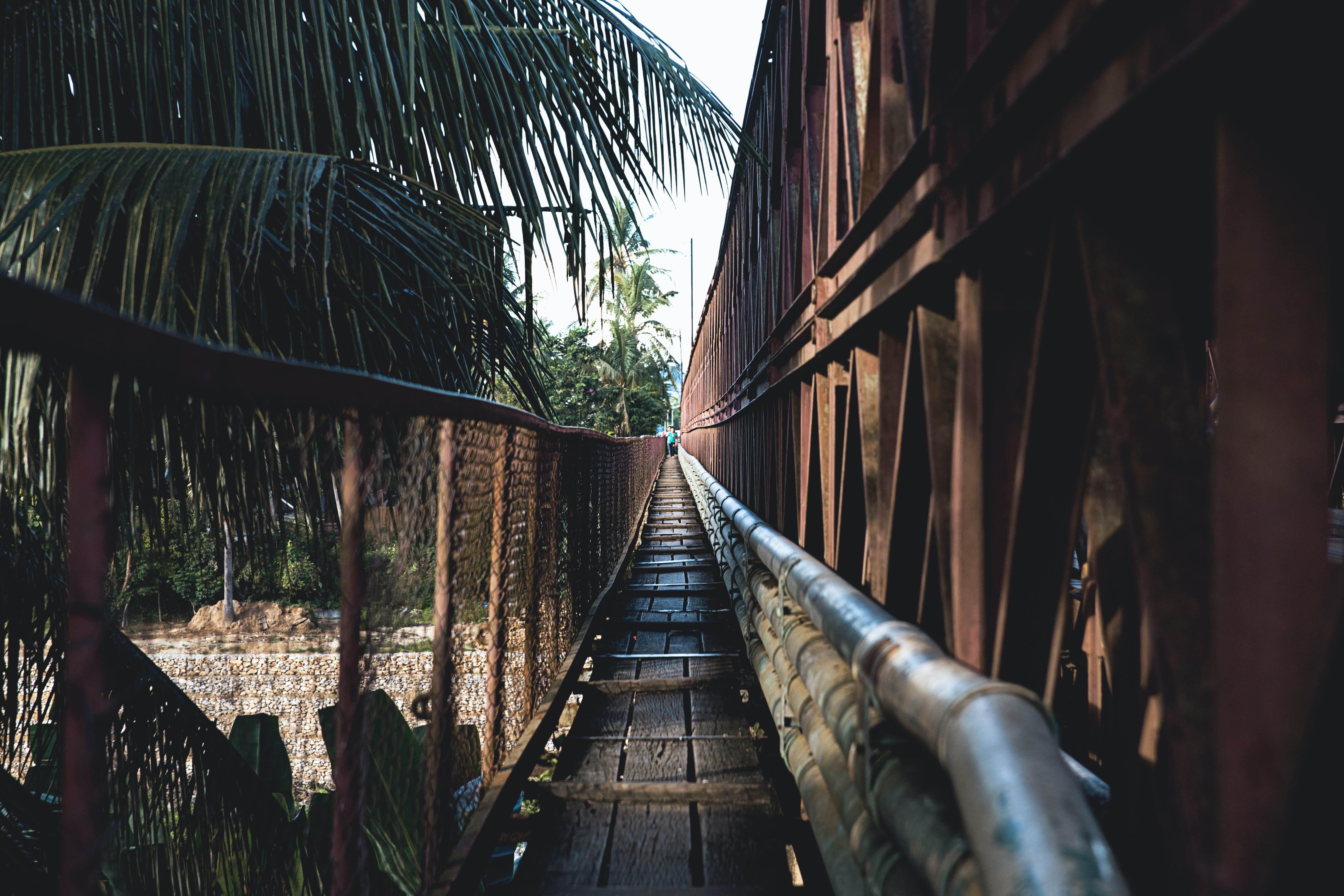 A wooden bridge that is lined with pipes and palm trees in Luang Prabang