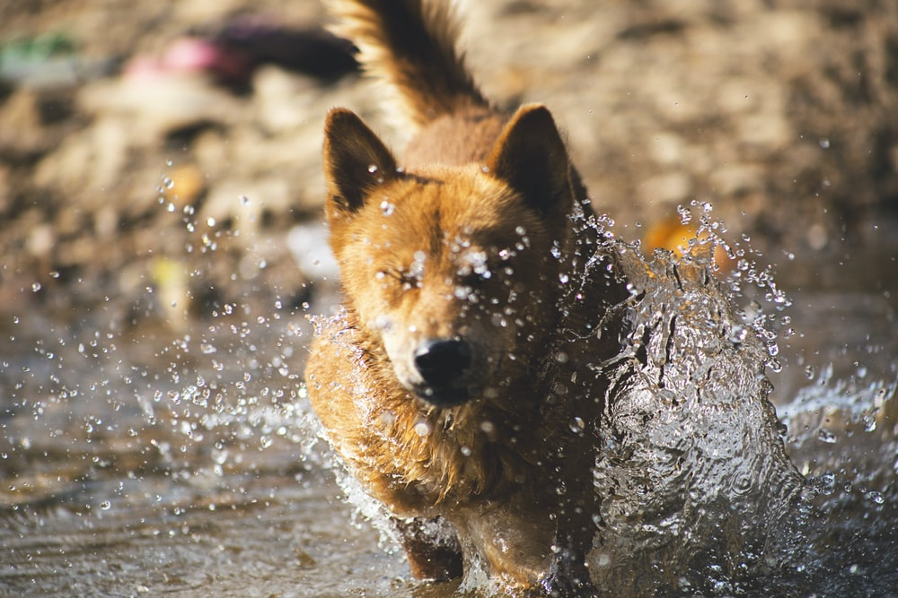 dog running across the water
