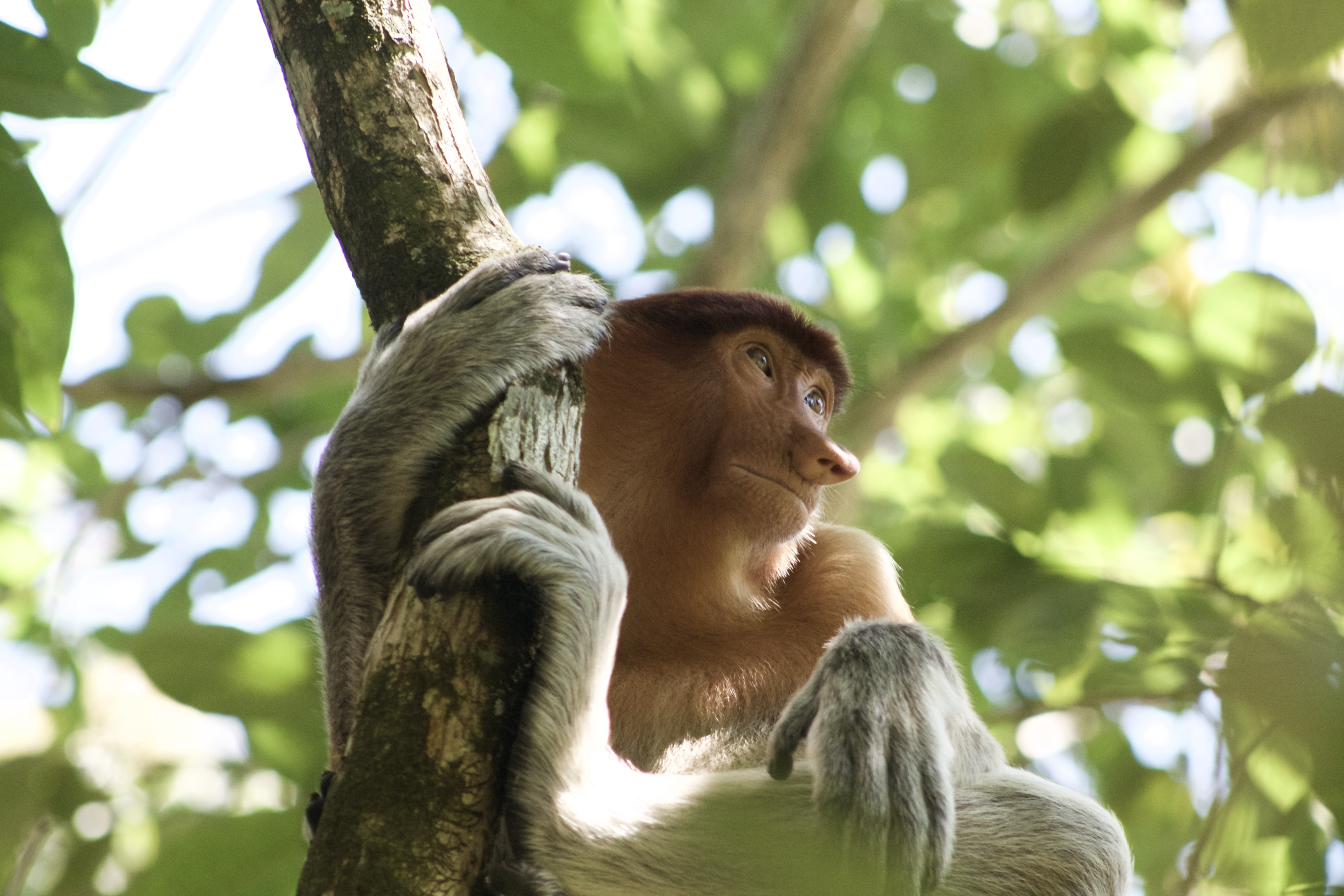 brown monkey holding in a tree branch during daytime