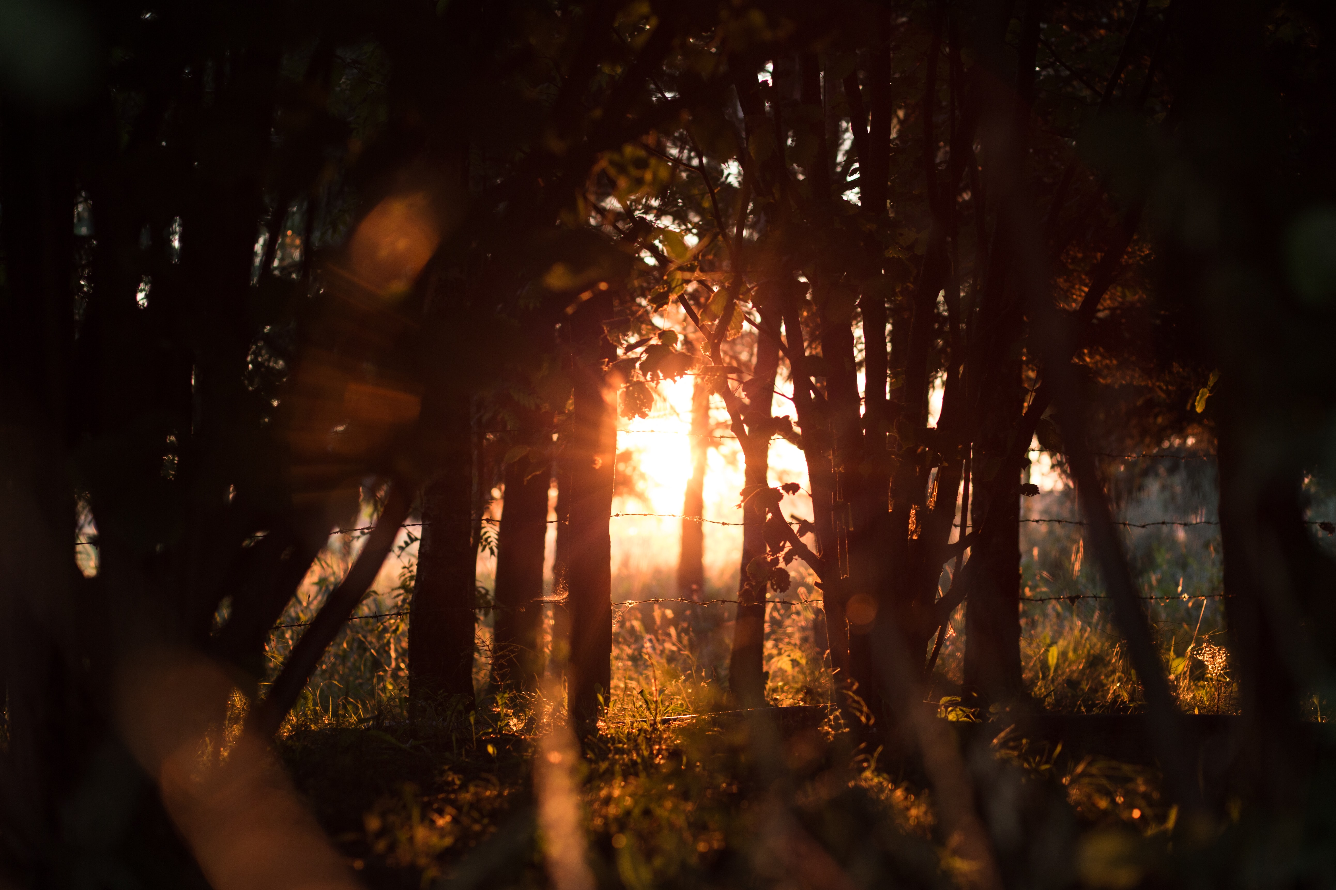 Sun rays peeking through trees near a wire fence during golden hour
