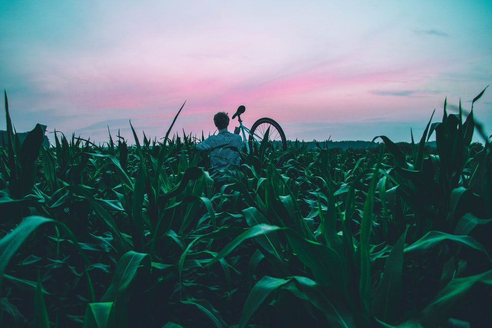 man standing of corn field