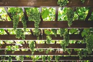 4622. Bor,szőlő, borászatok