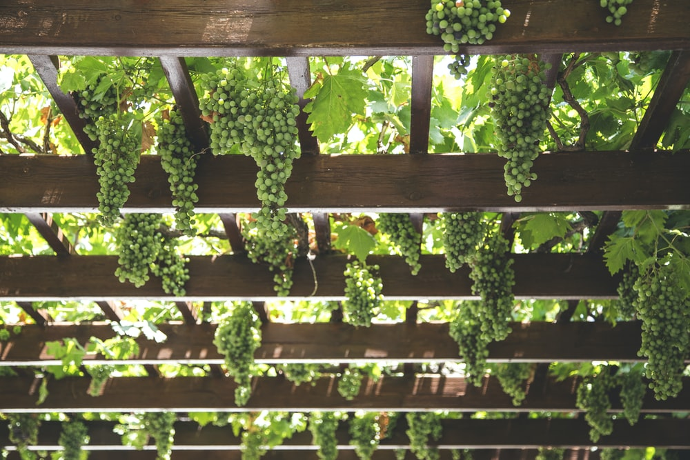 green grapes hanging on brown wooden arboire