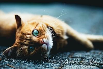 Cute kitty Jake