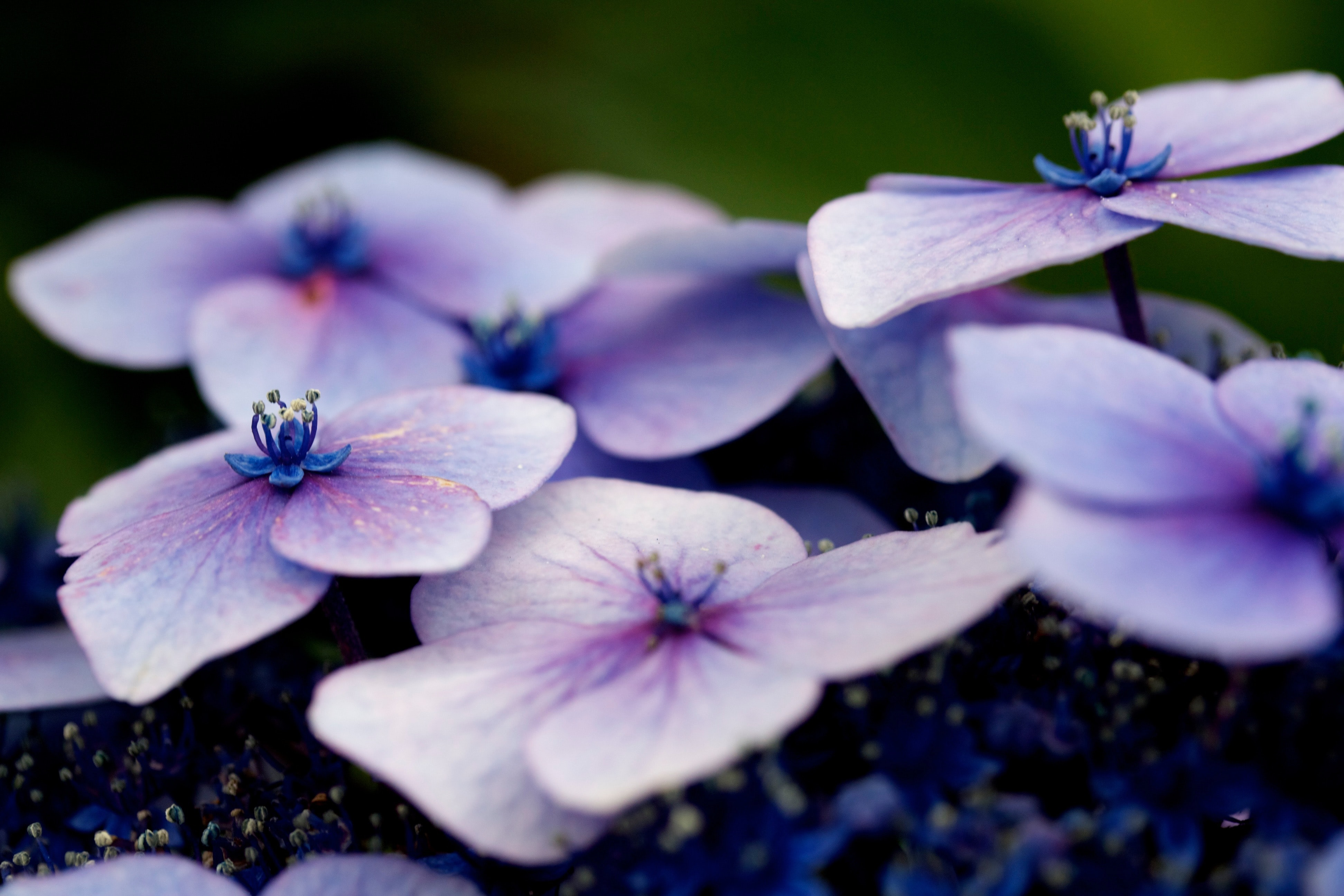 white and purple flowers in shallow focus