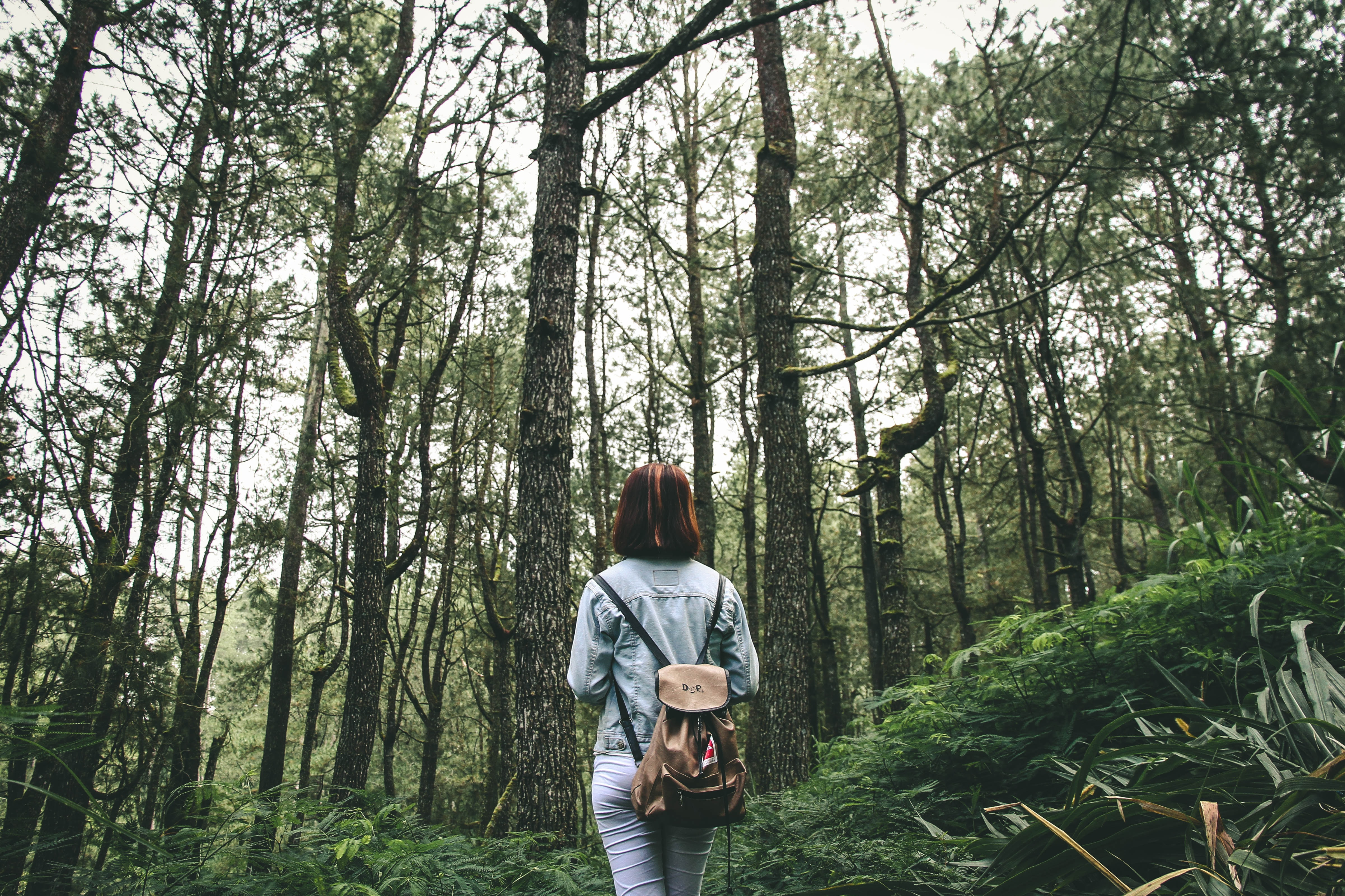 woman surrounded by brown and green tall trees during daytime