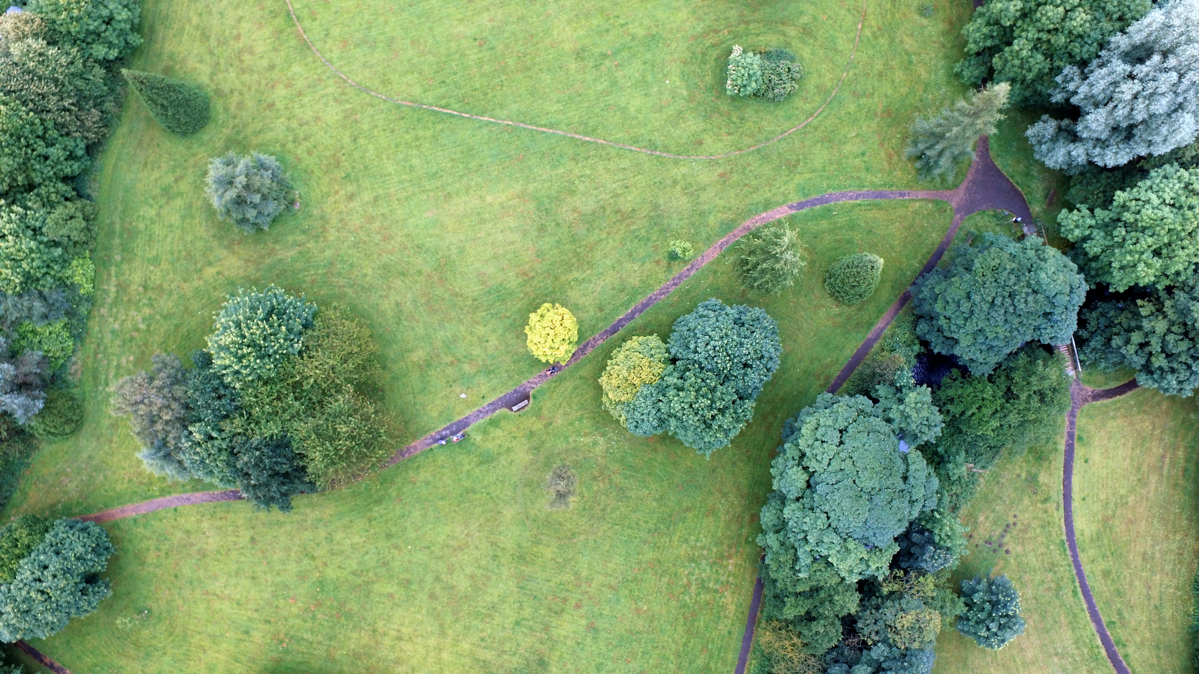 aerial photography of pathways and tall trees at daytime
